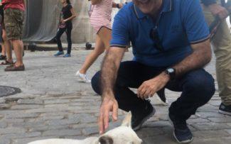 CUBA: PROTEÇÃO ATUANTE AOS ANIMAIS