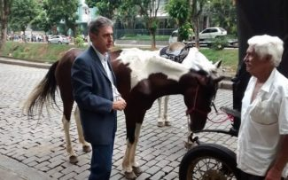 Comissão da OAB acompanha regras para trato com os cavalos em Petrópolis (RJ)