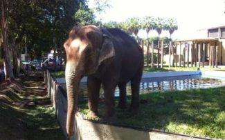 Zoológico do Rio em estado lastimável provoca sofrimento nos animais