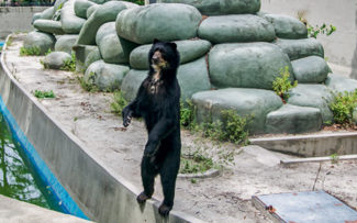 OAB RJ investiga situação de animais em zoológico do RJ