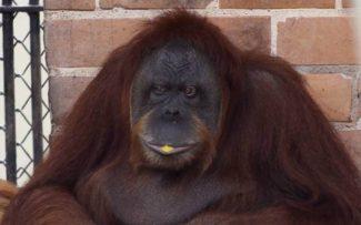 Zoológico: OAB/RJ derruba liminar e salva 1.300 vidas