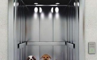 Proteção aos Animais nos Condomínios