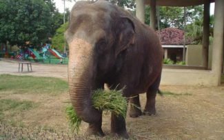 OAB derruba liminar e salva muitas vidas no Zoológico do RJ