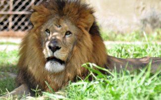 OAB do Rio quer conhecer propostas de gestão do zoológico da cidade