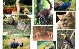 Futuro do zoológico do Rio será definido em audiência nesta quinta