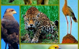 Centenas de espécies estão ameaçadas pelo rompimento da barragem