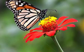 Destruição de habitats elimina milhões de insetos polinizadores