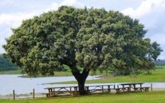 """Plantar árvores: """"remédio"""" contra o aquecimento global"""