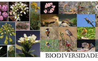 Dia da Biodiversidade – 22 de maio