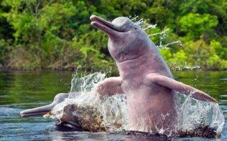O massacre silencioso dos Golfinhos e Botos