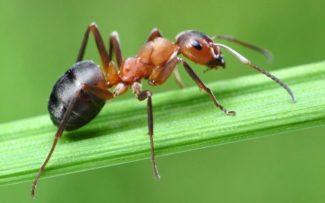 Formigas destroem teia de aranha para resgatar companheira