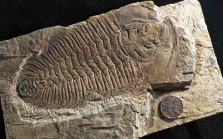 """Pesquisadores acreditam ter encontrado o """"Rei"""" dos animais pré-históricos"""