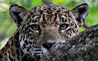 Sociedade brasileira não quer matança de animais