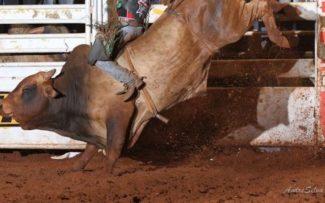 Comissão da OAB/RJ quer barrar o Rodeio de Araruama.