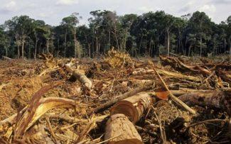Destruição da Amazônia aumenta a cada dia