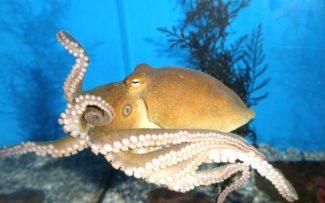 Aquecimento global deixa invertebrados marinhos cegos