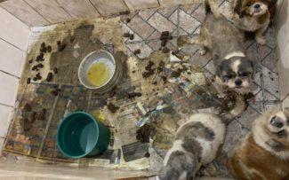 Vigilância Sanitária interdita e multa canil que mantinha animais sob maus tratos