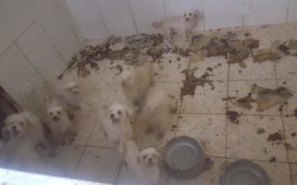 Animais são encontrados em condições insalubres em 'canil do terror' no Grajaú