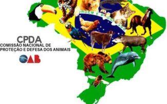 """Projeto de Lei """"Animal não é coisa"""" será pauta da OAB"""