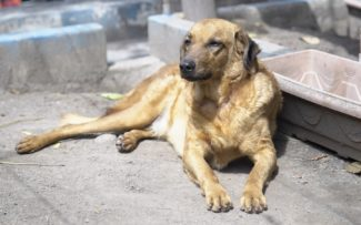 RJ possui 12 mil animais em ONGs esperando um lar, diz instituto