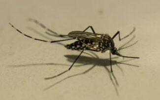 A Dengue vem aí