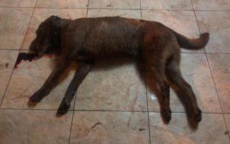 Morte de cão:50 golpes com taco de beisebol