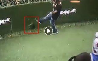 Polícia investiga caso de maus tratos a gato no Jockey Club da Gávea