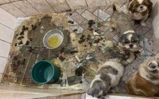 Canil do Terror: OAB recebe novas denúncias