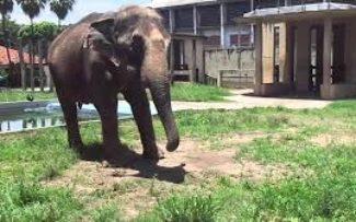 OAB cria CTI para inspecionar Zoológico