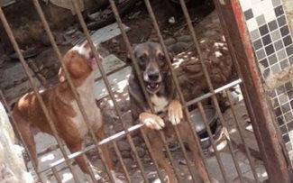 Lei que cria delegacia de combate aos maus-tratos contra animais é sancionada