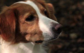 Governo do RJ sanciona lei que cria delegacia de proteção animal