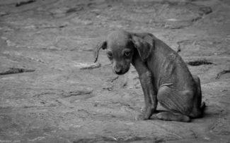 Rio terá delegacia de combate aos maus-tratos contra animais