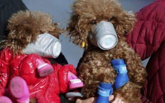 Animais também podem ser infectados por doenças respiratórias