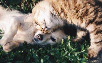 OAB se posiciona a favor de liminar que proíbe que animais resgatados sejam mortos