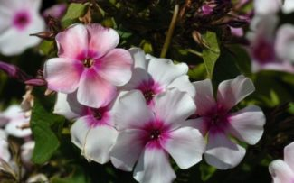 O poder das plantas: como elas se recuperam após golpes
