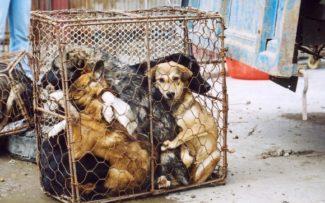 Cães deixam de ser considerados animais para consumo na China