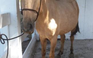 Em ação inédita, comissão tenta impedir eutanásia de égua e garantir 'direito de nascer' a filhote