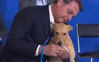 Presidente sanciona lei contra maus-tratos a animais