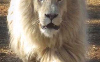 Santuário de Leões