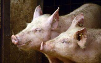 Exame da OAB pode ganhar questões sobre direitos dos animais