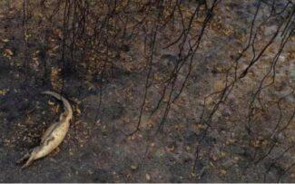 Aumento do desmatamento no Brasil piora risco de zoonoses e covid.