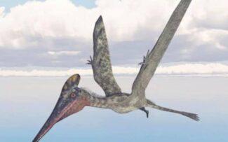 Os gigantes voadores