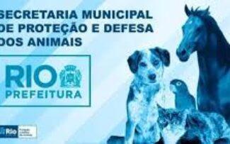 Animais: Secretário quer a revisão da legislação municipal/RJ