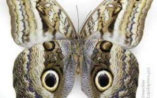 Teoria da Evolução de Darwin na Amazônia