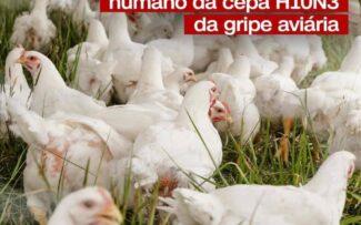 China relata primeiro caso da cepa H10N3 da gripe aviária