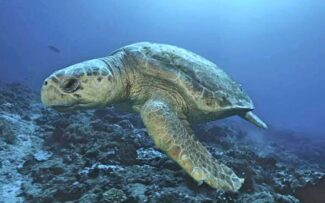 Projeto Protegendo as Tartarugas Marinhas no litoral do Norte Fluminense