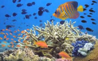 Vidas marinhas em perigo