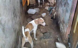 STF julga inconstitucional o abate de animais apreendidos vítimas de maus tratos