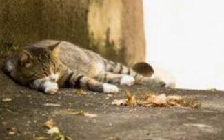 Abate de animais resgatados é julgado inconstitucional pelo STF